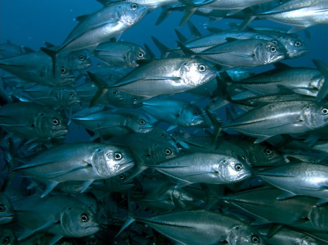 US Magnuson-Stevens Fishery Conservation & Management Act has prompted rebuilding of a number of fish stocks