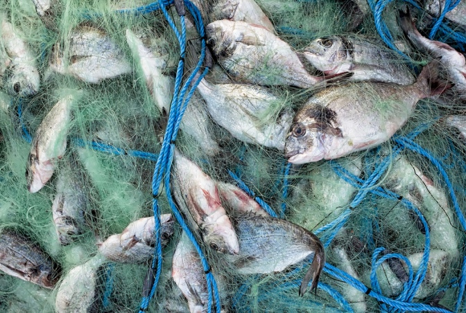 Can balanced harvesting produce more sustainable fisheries?