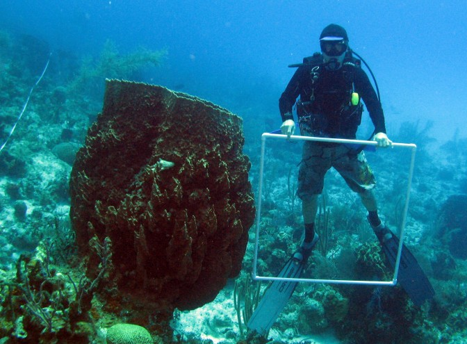Overfishing linked to increasing numbers of sponge