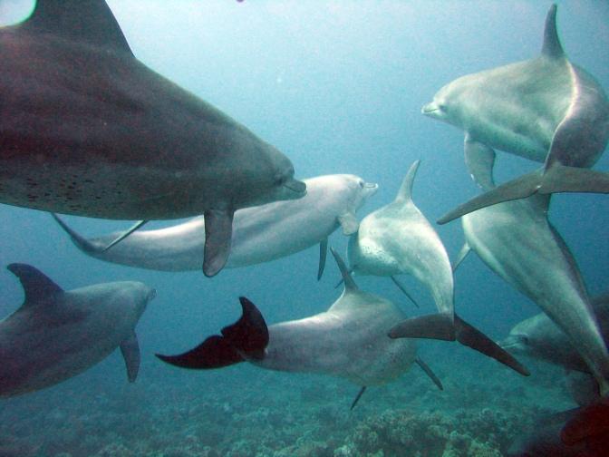Protecting Kenya's dolphin habitat