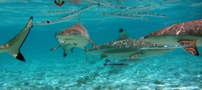Citizen Science shows promise for shark monitoring