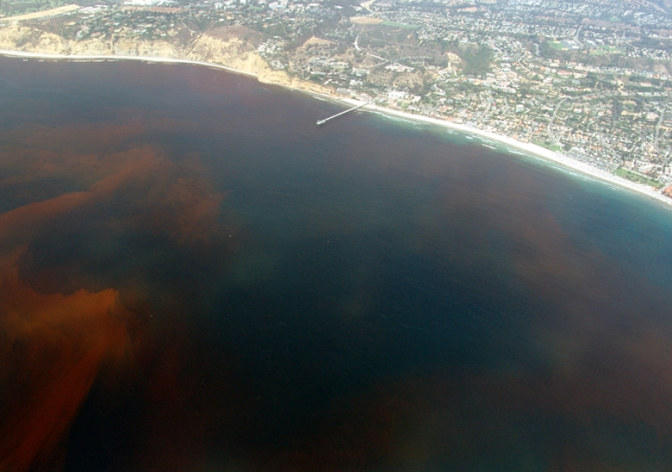 Gulf of Mexico's Ocean Dead Zones