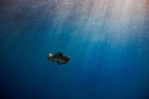 Plastics are a sea turtle's not so tasty treat