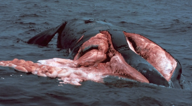 How not to hit a whale: Move the shipping lane