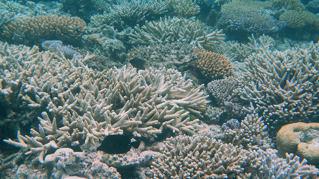 What the GBRMPA chair DID NOT say about my coral bleaching article